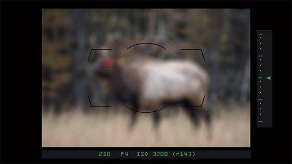 puntos-enfoque-sensor